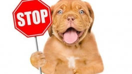 Attention Breeders We Can Sell Your Puppies For You. At No Cost! Please Contact Us